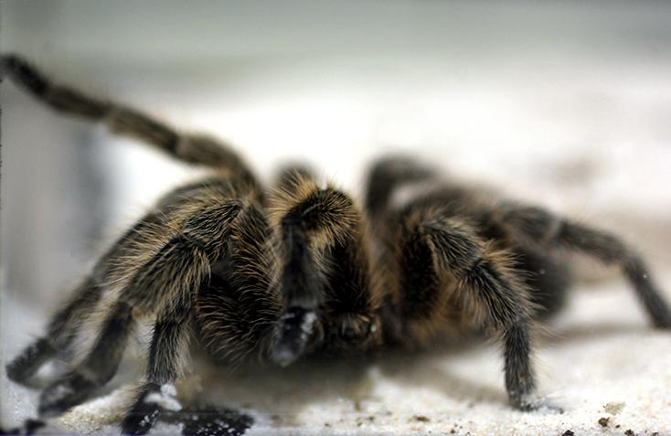Surprising+facts+about+spiders+that+you+did+not+know