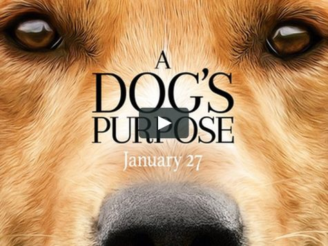 A Dog's Purpose is not to drown
