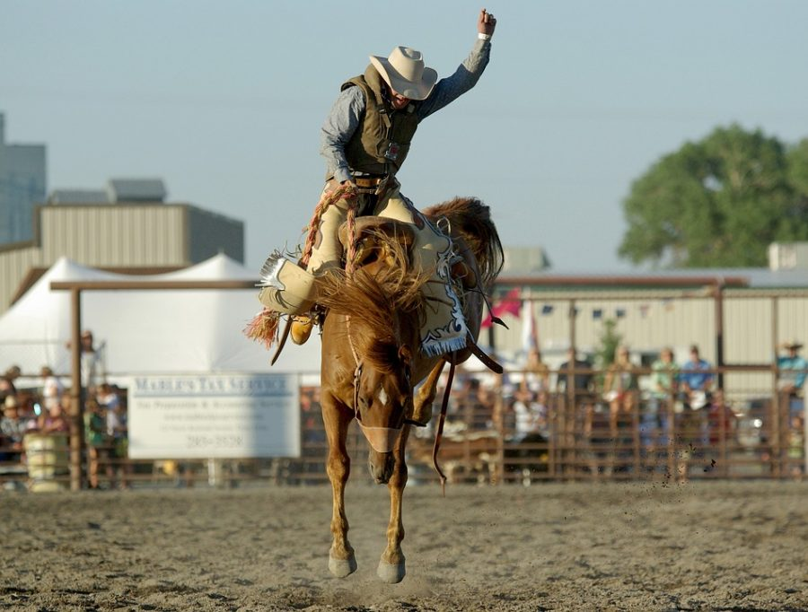 Western Horse Bronco Riding Rodeo Bucking Cowboy