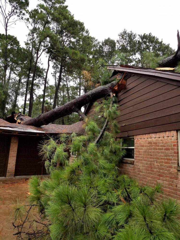 Harvey winds caused a pine tree to fall on a house Monday, August 28.