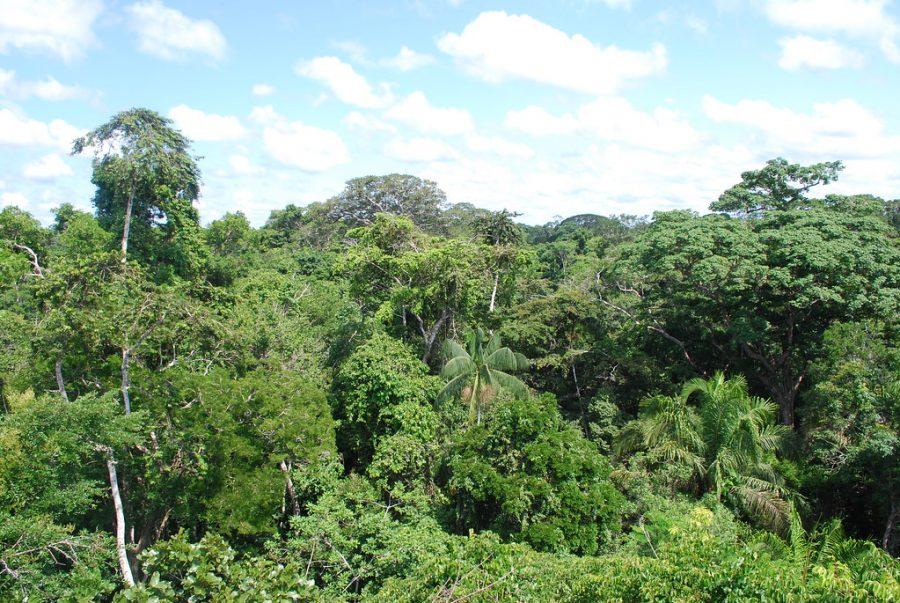 %22Amazon+rainforest+near+Puerto+Maldonado%22+by+Ivan+Mlinaric+is+licensed+under+CC+BY+2.0