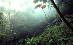 What's Going On in the Amazon?