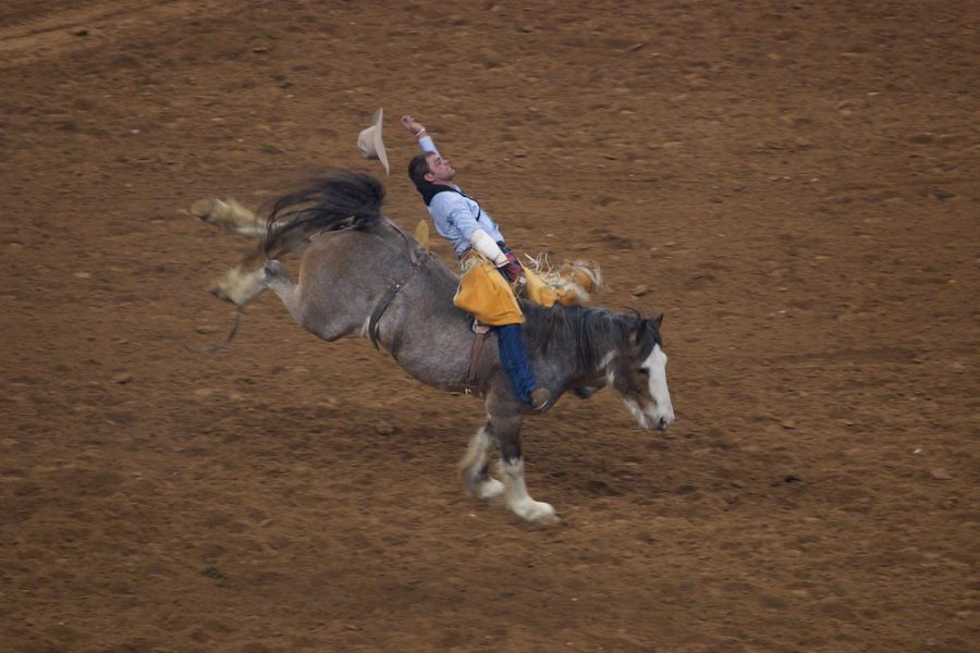 %22Houston+Rodeo+and+Livestock+show%22+by+p_a_h+is+licensed+under+CC+BY+2.0